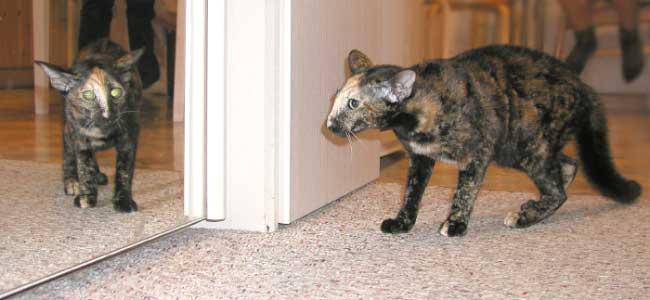 Черная кошка Валерий Меладзе. Слушать онлайн на Яндекс.Музыке