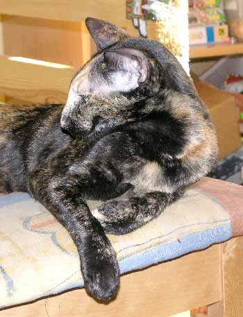 Кошки продажа котят фотоальбом пометы