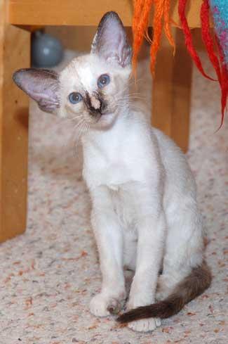 окрасы кошек фото - фотография 1.