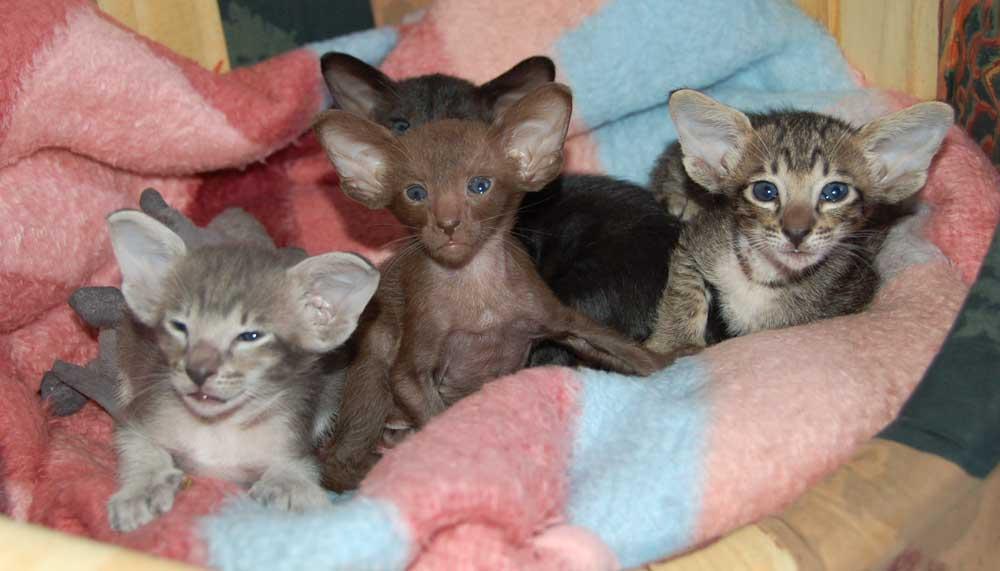 фото котёнка 1 месяца